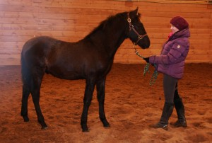 Ares in the arena Jan 17 #2