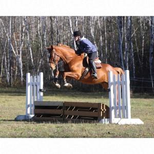 AristaGS-FuerstGotthard2009Gelding-jumping